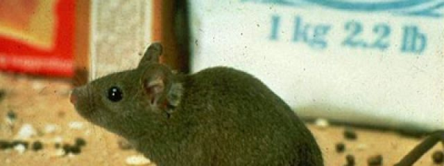 How Do I Know I Have a Rodent Problem? | Bugs by Brian