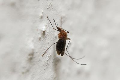 mosquito-season